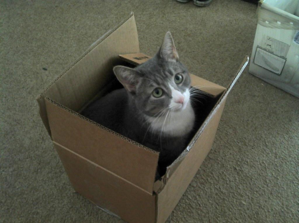 Chico in a Box